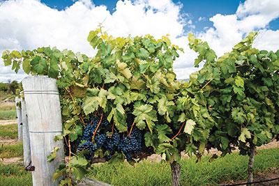 Air Tours of Australia | Australia Air Tours - Stanthorpe wineries