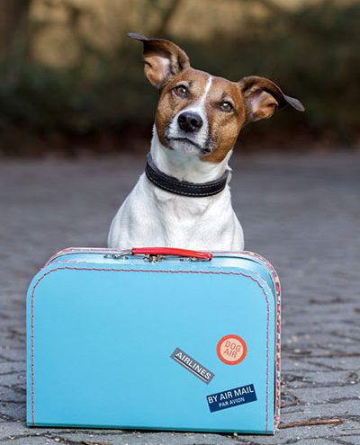Dog with packed bag - Private charter